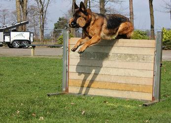 Duitse Herder Training